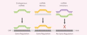 miRNA Analysis