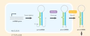 Basics of miRNA