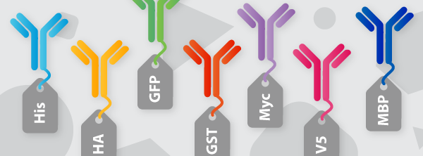 Tag and Loading Control Antibodies